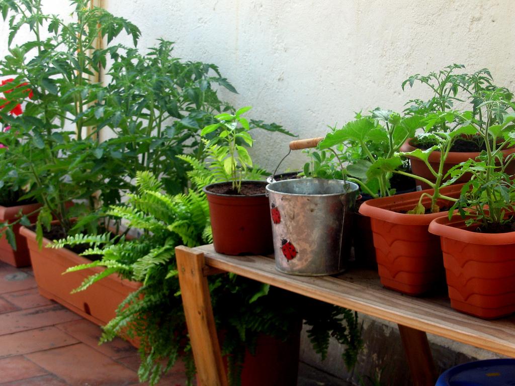 Ventajas de poner un huerto en casa blog de dia - Del huerto a casa ...