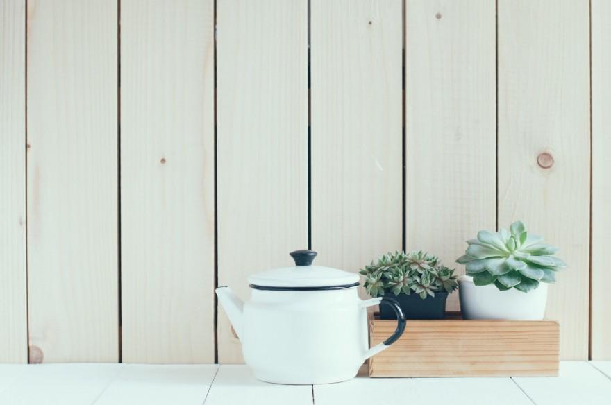 Las mejores plantas para interiores for Mejores plantas para interior