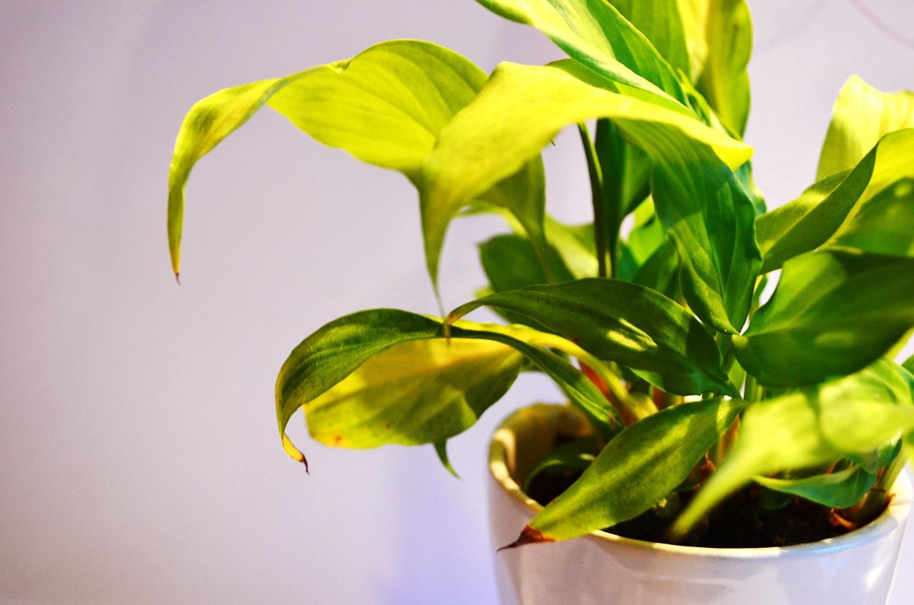 Las mejores plantas de interior blog de dia - Las mejores plantas de interior ...