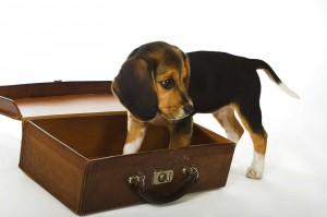 Planes de verano en los que incluir a tu perro