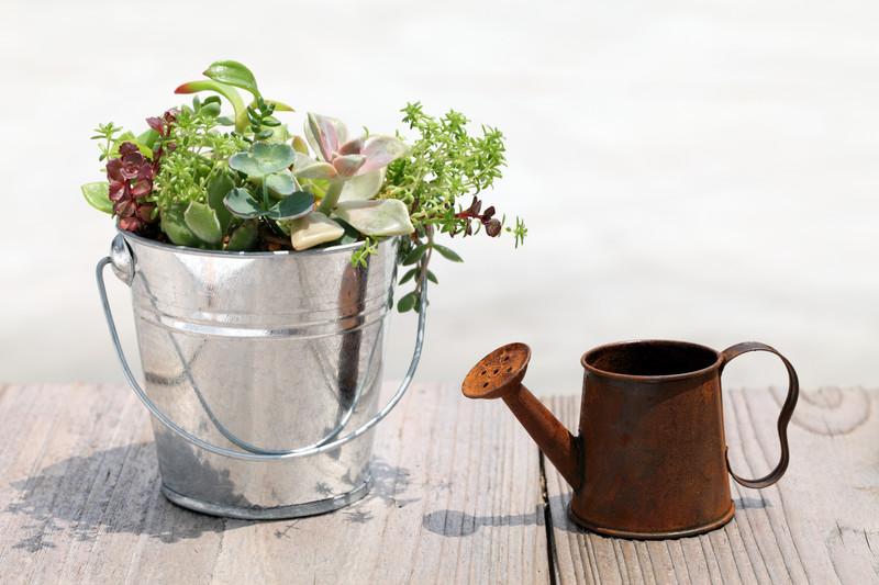 plantar hierbas en latas