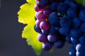 Las frutas típicas de otoño (II)