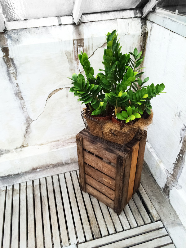 caja de madera con planta