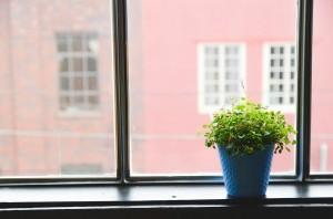 Las mejores plantas de interior