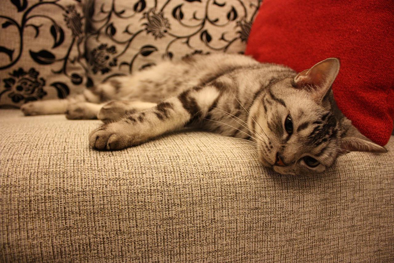 pelo de gato