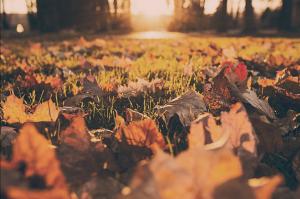 Este otoño, ¡aburrirse está prohibido!