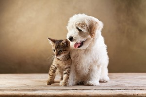 Cómo conseguir un pelo fuerte y suave para tu mascota