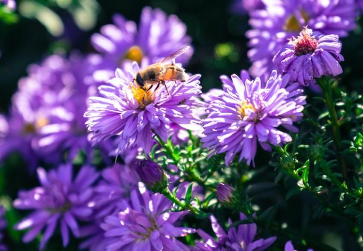 C mo evitar la alergia en casa blog de dia - Como evitar la condensacion en casa ...