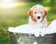 ¿Cada cuánto lavar a nuestra mascota?