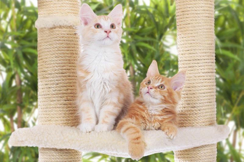 arañar gatos