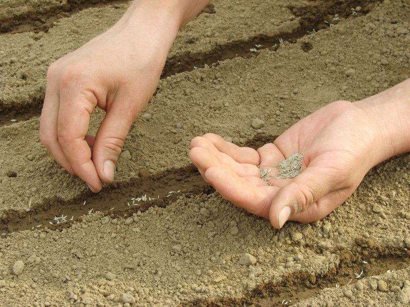 semillas de los ecohuertos