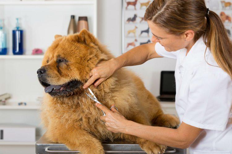 Consejos para cortar el pelo de tu perro