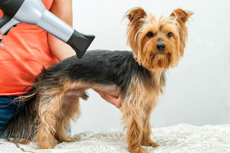Consejos para cortar el pelo de tu perroo