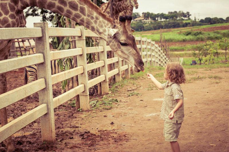 hijos zoo
