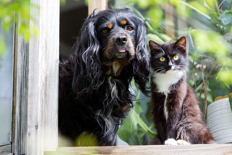 Cómo mantener el brillo en el pelo de tu mascota