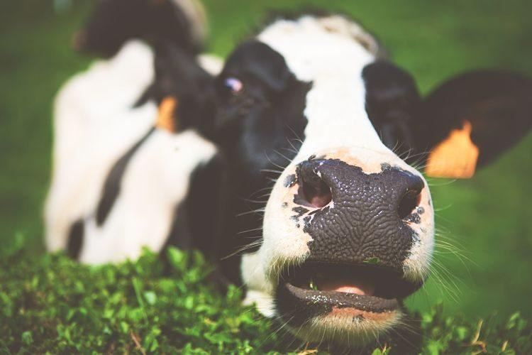Leche de almendras y otras alternativas a la leche de vaca