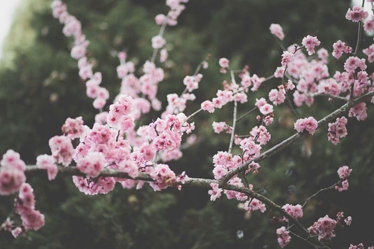 Remedios caseros contra la alergia primaveral