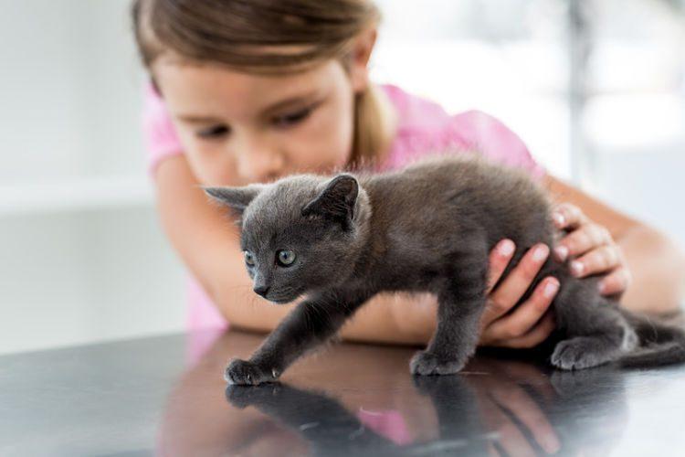 Niños y gatos: ¿cómo hacer que se lleven bien?