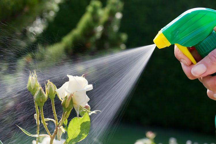 ¿Cómo hacer un insecticida casero fácil?