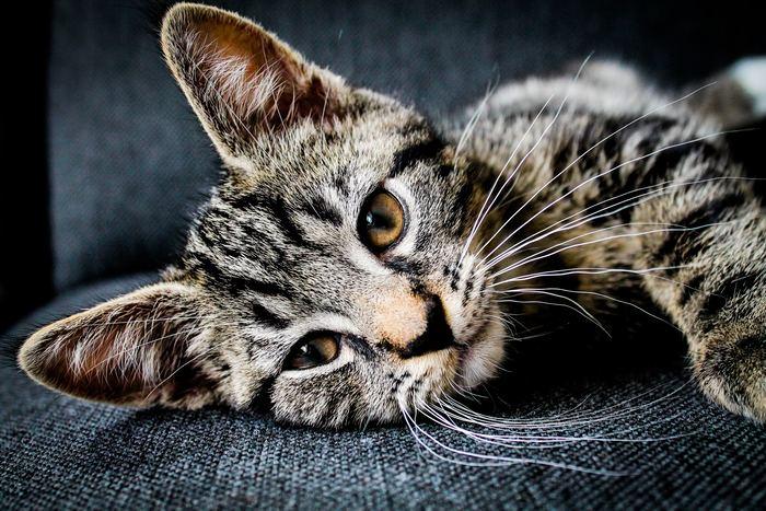 Dia Internacional del Gato: conoce todo acerca de tu amigo felino
