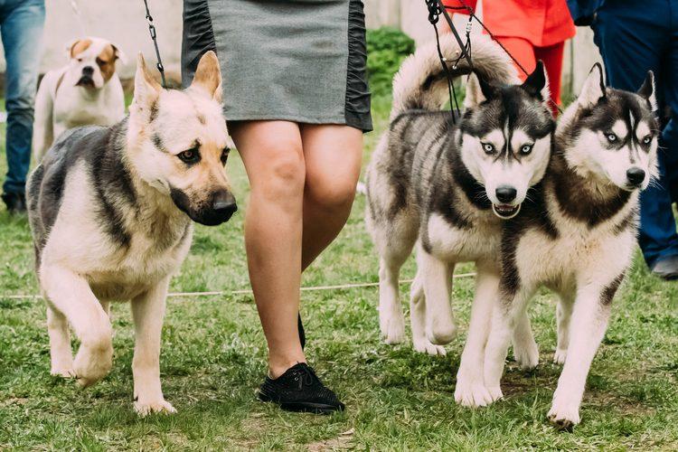 Top 5 de las razas de perro más inteligentes