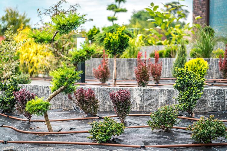 REGAR LAS PLANTAS EN VACACIONES